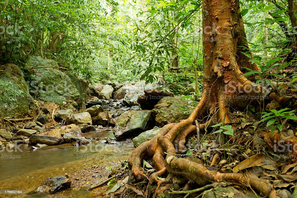 Close-up of a beautiful rainforest landscape - Royalty-free Asia Stock Photo