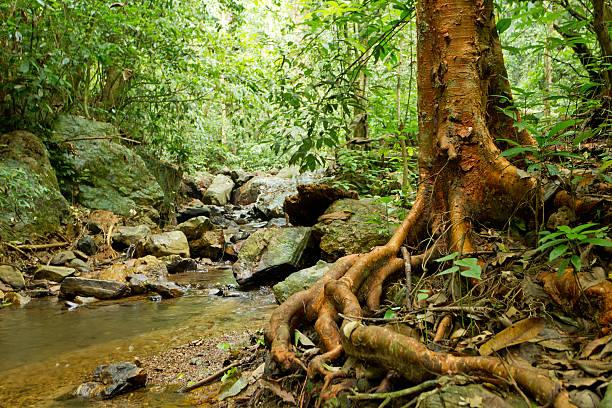 Close-up of a beautiful rainforest landscape stock photo