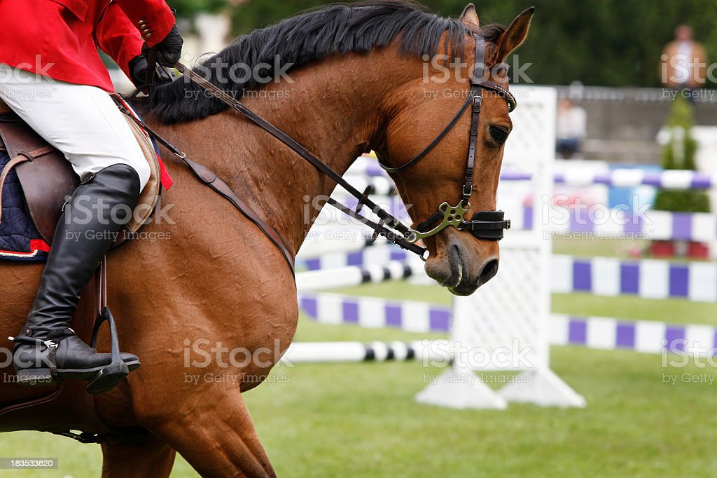 A close-up of a beautiful show jumping horse stock photo
