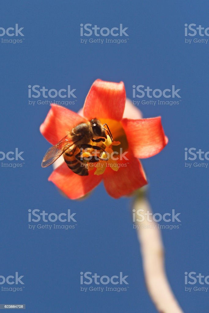 Close-up of a bee collecting pollen from a flower stock photo
