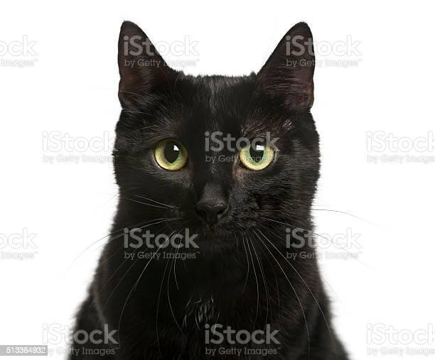 Closeup of a black cat in front of white background picture id513364932?b=1&k=6&m=513364932&s=612x612&h=vbvbuqjf1uwg1dzokljkzy7z4qlnlvavndgvpswwj3s=