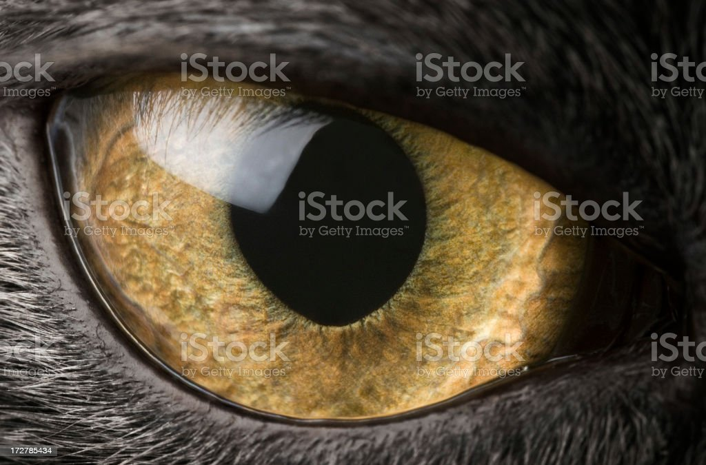 A close-up of a black cat's eye stock photo