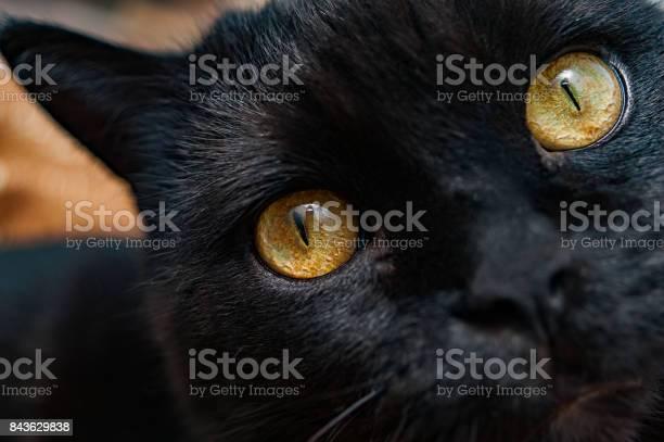 Closeup of a black cats yellow eyes picture id843629838?b=1&k=6&m=843629838&s=612x612&h=dfqaqwbjbu3lv6a7yfu5ile9uniwnkg21nhfqbiq4by=