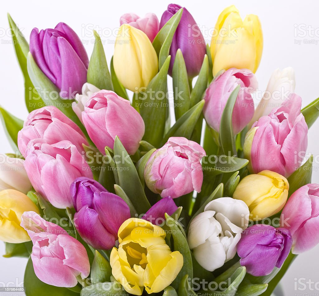 A close-up of a bouquet of tulips stock photo