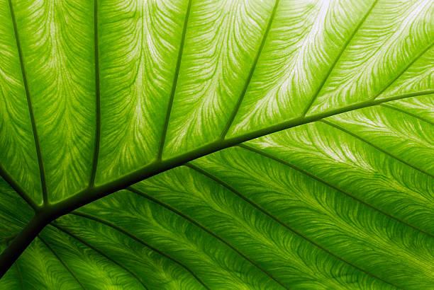palm leaf - natürliches muster stock-fotos und bilder