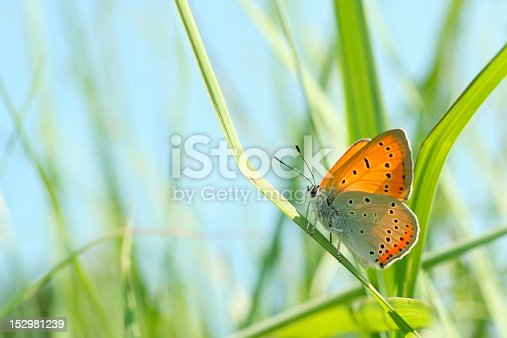 istock Closeup of a butterfly 152981239