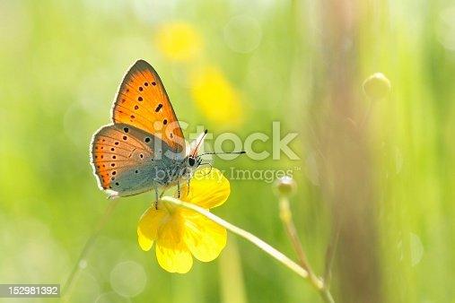 istock Closeup of a butterfly 152981392