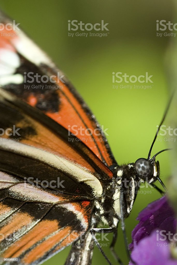 Close-up of a butterfly royalty-free stock photo