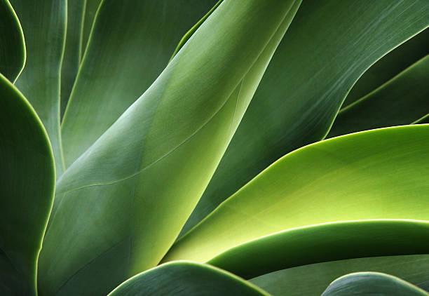 close-up of a cactus - 特寫 個照片及圖片檔