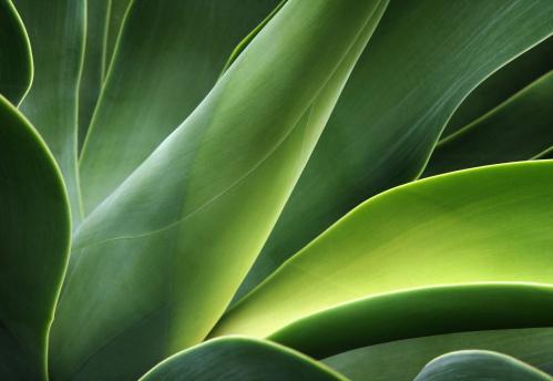 Closeup Of A Cactus 照片檔及更多 仙人掌 照片