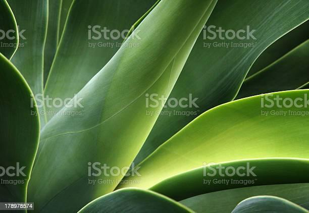 Photo of close-up of a cactus