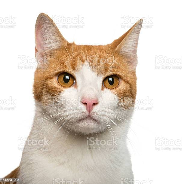 Closeup of a cat in front of white background picture id513231028?b=1&k=6&m=513231028&s=612x612&h=a kat1tkw85otehqhizda4ra1dwcx37sjc7o1uqvwhg=
