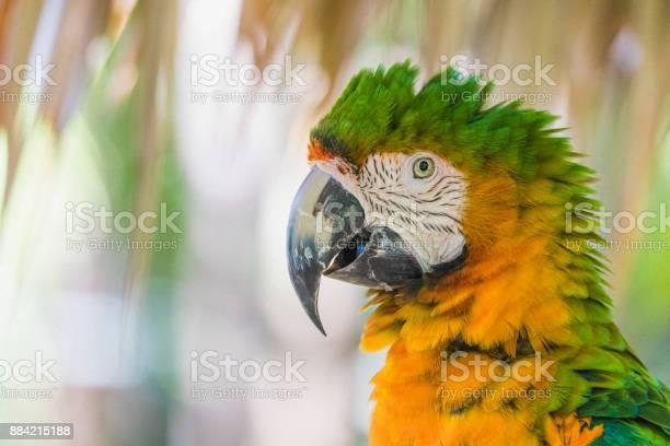 Closeup Van Een Catalina Ara Een Afkorting Voor Rainbow Ara Zoals Gezien In De Bahamas Stockfoto en meer beelden van Bahama's
