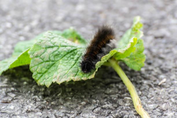 Close-up of a caterpillar
