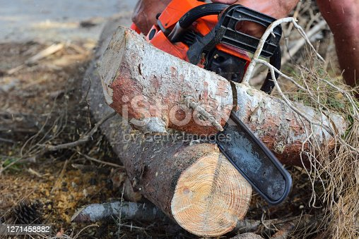 close-up of a chainsaw eating its way through some tree trunks on the ground with its saw blade