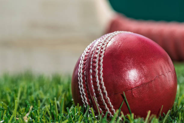 A close-up of a Cricket ball sitting in the grass with a bat in grass stock photo