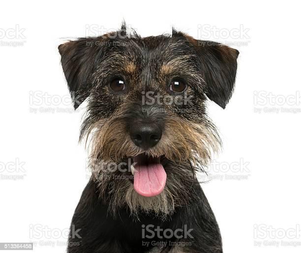 Closeup of a crossbreed dog in front of white background picture id513364458?b=1&k=6&m=513364458&s=612x612&h=fw3uqb3gaq0yjthmgczvdqhowtrmkcesadkchykhaai=