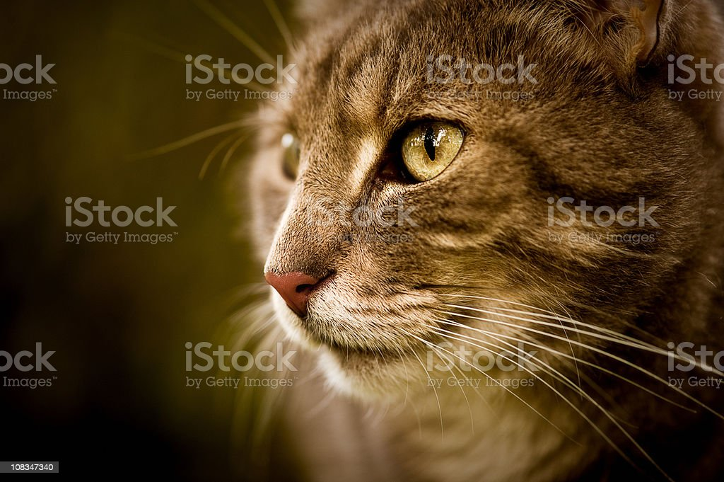 Close-up of a cute cat royalty-free stock photo