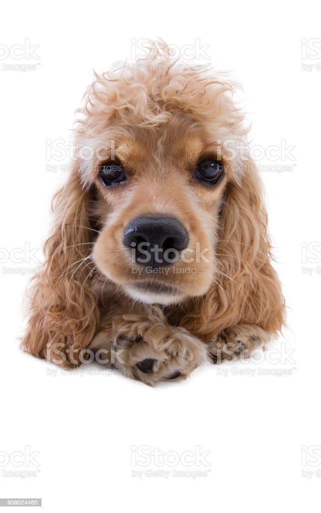 Close-up of a cute dog looking at camera stock photo