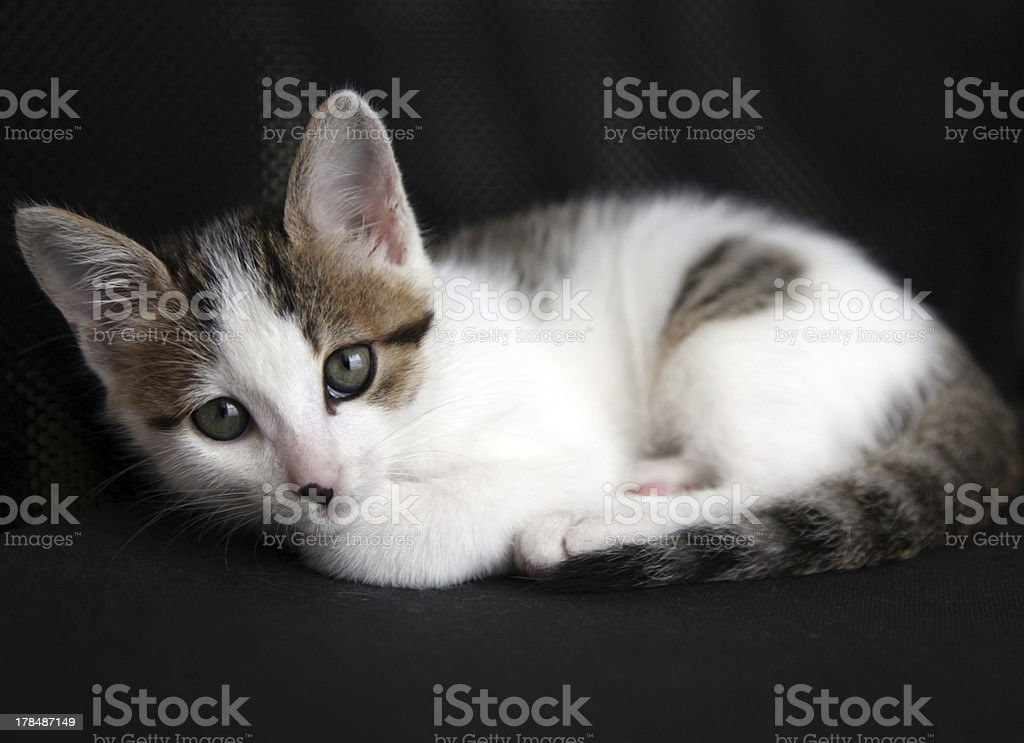 Closeup of a cute kitten royalty-free stock photo