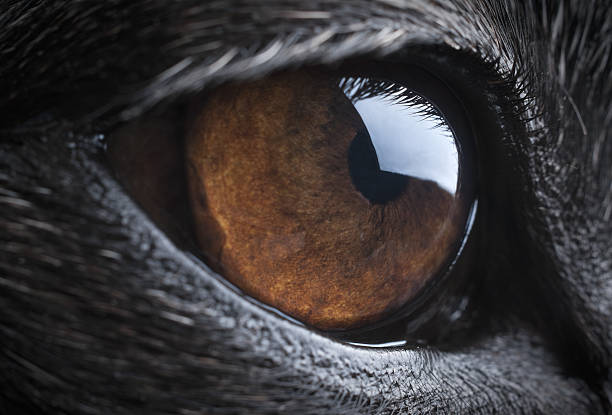 Close-up of a dog's eye stock photo