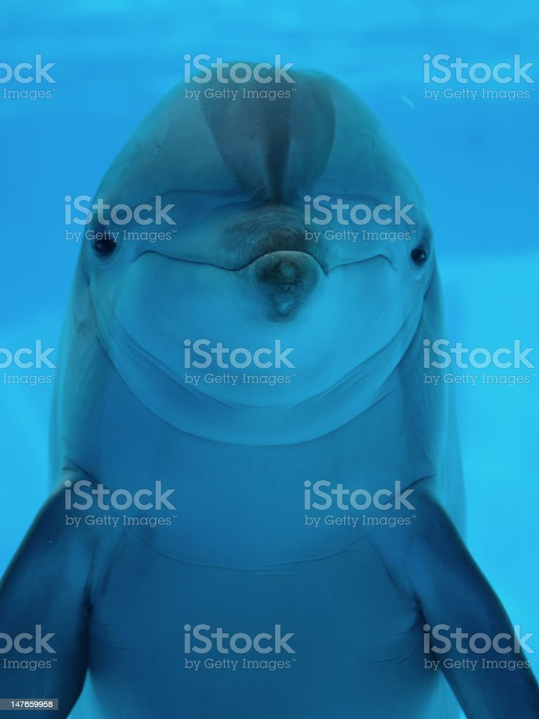 Close-up of a dolphin looking at the camera stock photo