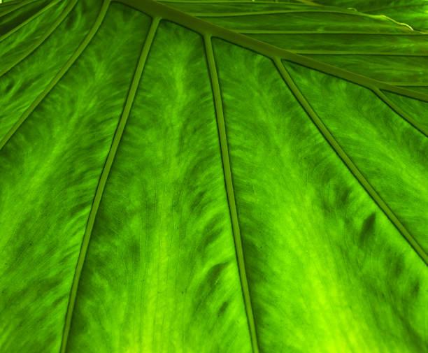 Closeup of a fake plastic green leaf stok fotoğrafı