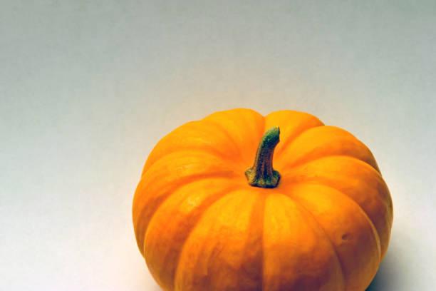 closeup of a farm fresh orange mini pumpkin isolated against plain, simple, graded background - pumpkin pie стоковые фото и изображения