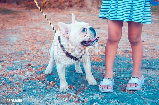 Closeup of a fawn white French Bulldog looking at a little girl in vintage dress. Retro color style.