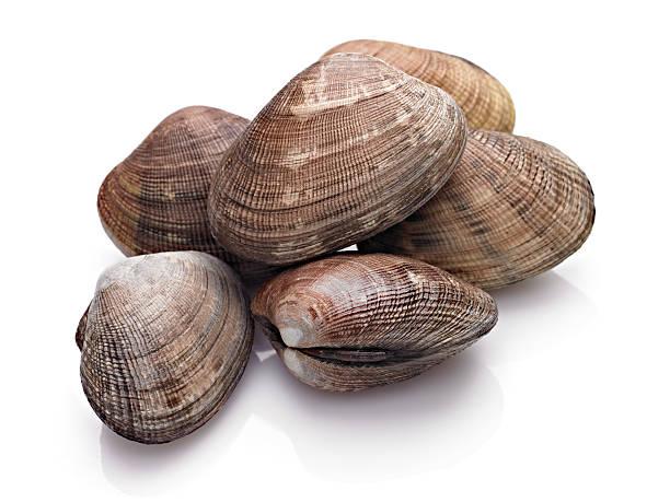 clam - mięczak zdjęcia i obrazy z banku zdjęć