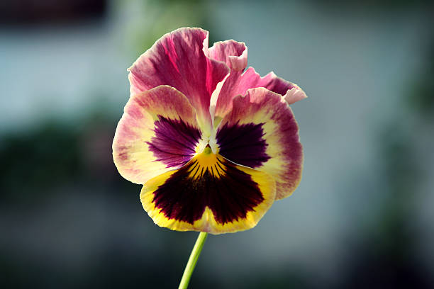 Nahaufnahme der Blüte – Foto