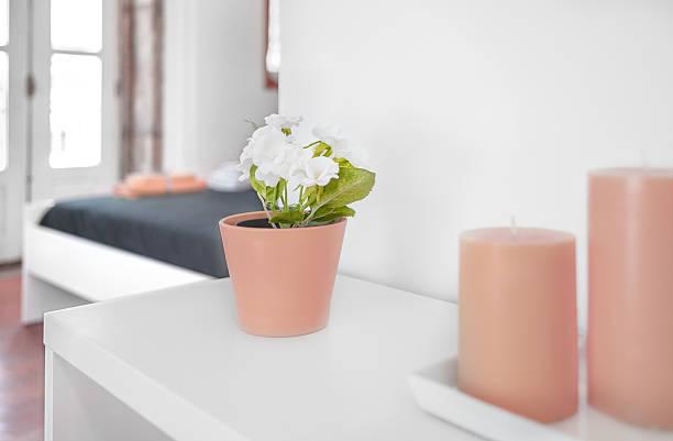 nahaufnahme von einem blumentopf - lila, grün, schlafzimmer stock-fotos und bilder