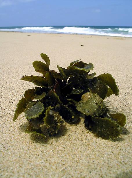 Nahaufnahme eines Grüne Pflanze auf den Strand – Foto