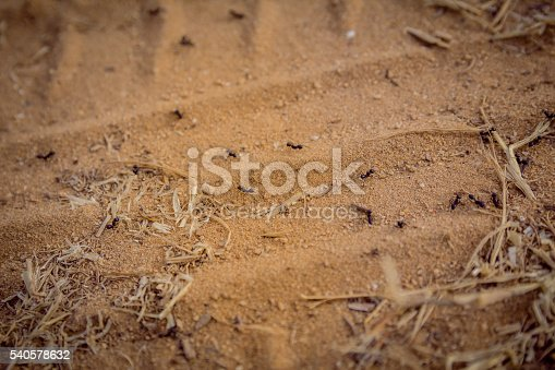 485413653istockphoto Closeup of a group of black ants walking on dirt 540578632