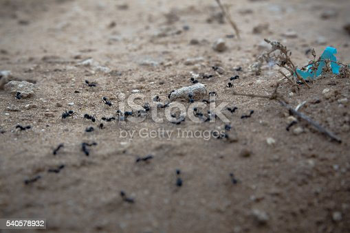 485413653istockphoto Closeup of a group of black ants walking on dirt 540578932