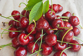 Handfuls of whole and freshly cherries picked from the tree