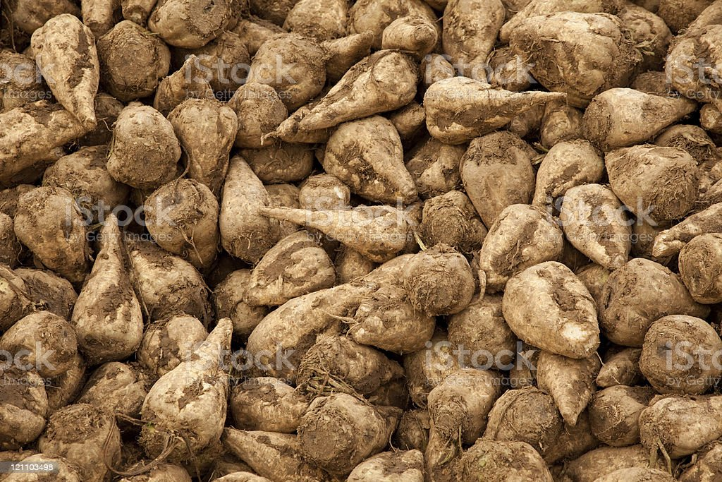 A close-up of a group of sugar beets stock photo