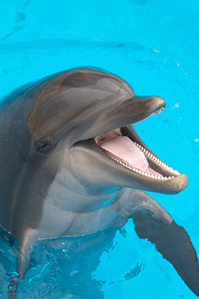 A close-up of a happy dolphin swimming圖像檔