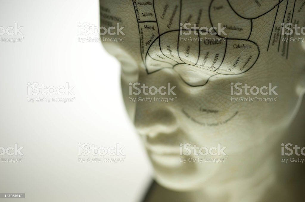 A close-up of a head of a Phrenology sculpture stock photo
