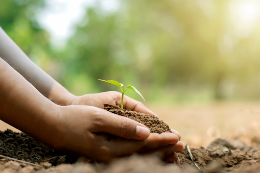 1139475964 istock photo Close-up of a human hand holding a seedling, including planting the seedlings, the concept of Earth Day and the global warming reduction campaign. 1252125741