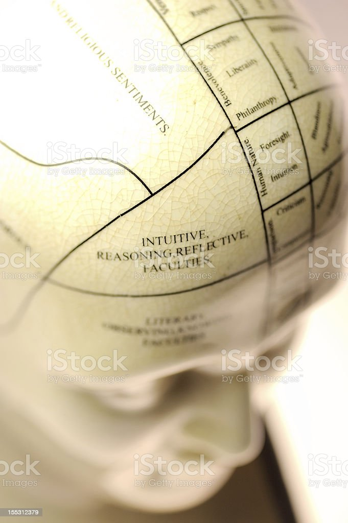 Closeup of a labeled phrenology head stock photo