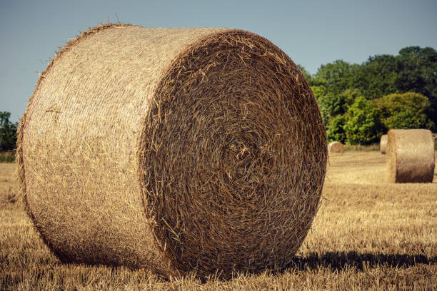 Closeup of a large bale of hay in a field stock photo