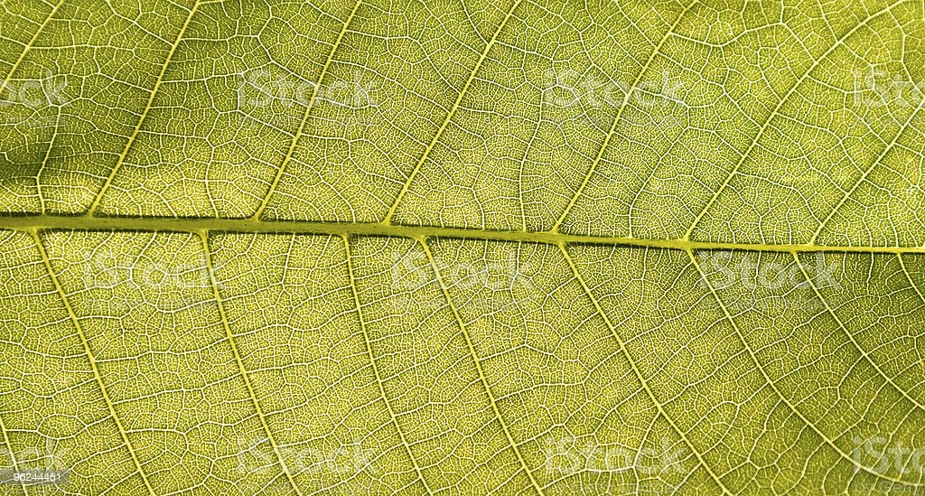 Close-up of a leaf royalty-free stock photo