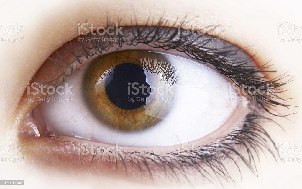Closeup of a light brown pupil royalty-free stock photo