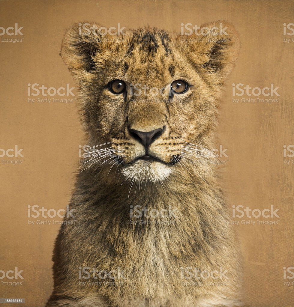 Close-up of a Lion cub, vintage background royalty-free stock photo