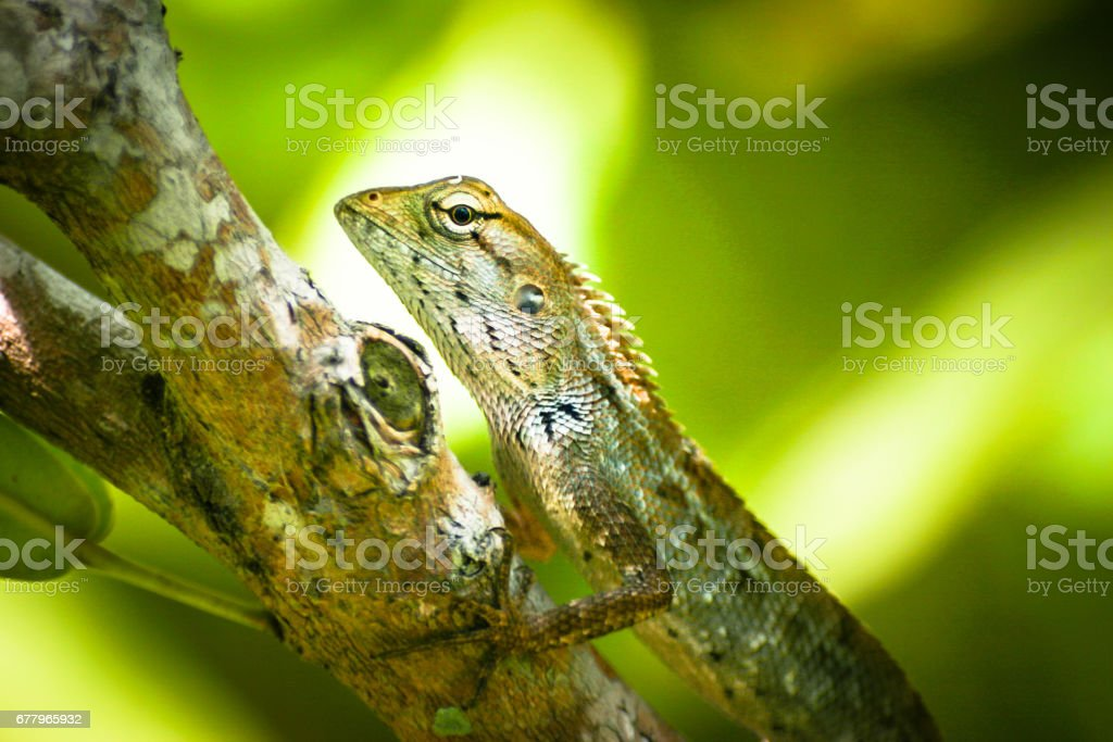 Closeup of a lizards kind of reptiles. Sitting on a  palm with green leafs and light in background. stock photo