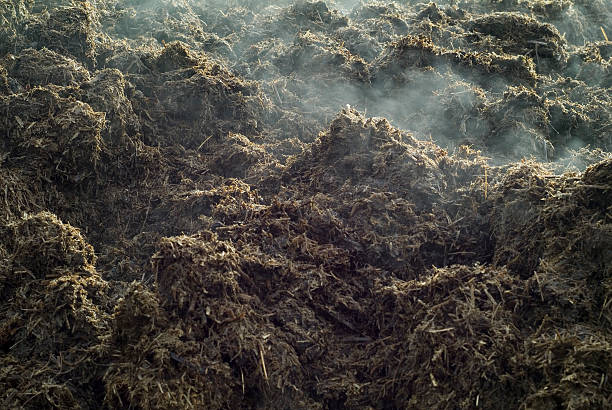 Close-up of a lot of steaming manure Pile of manure evaporating fumes by the heat. evaporation stock pictures, royalty-free photos & images