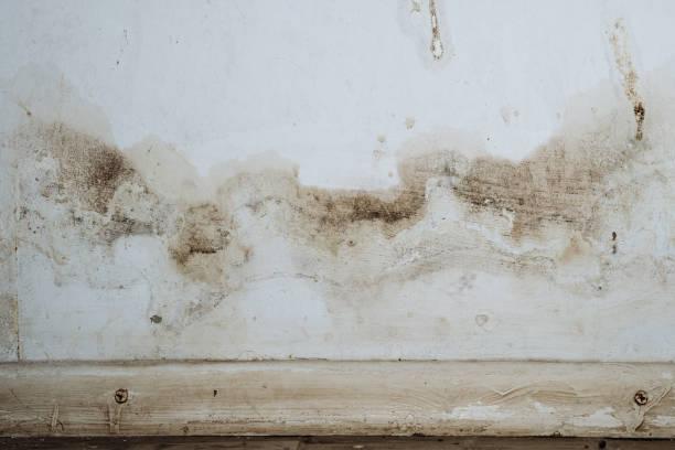 close-up van een mal muur met schimmel - schimmel stockfoto's en -beelden