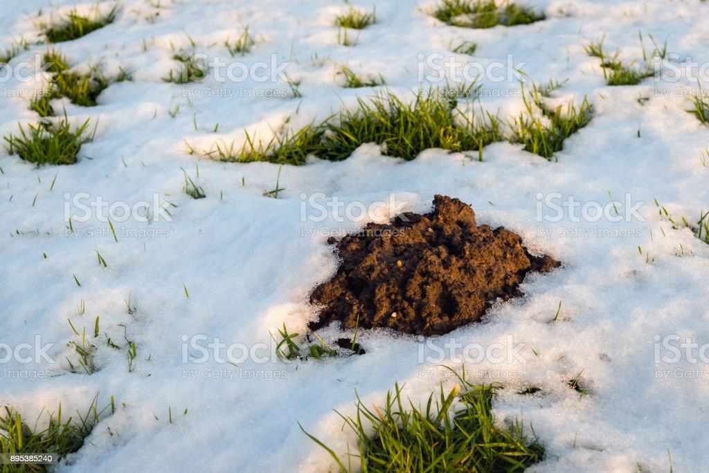 Closeup of a molehill in the snow stock photo