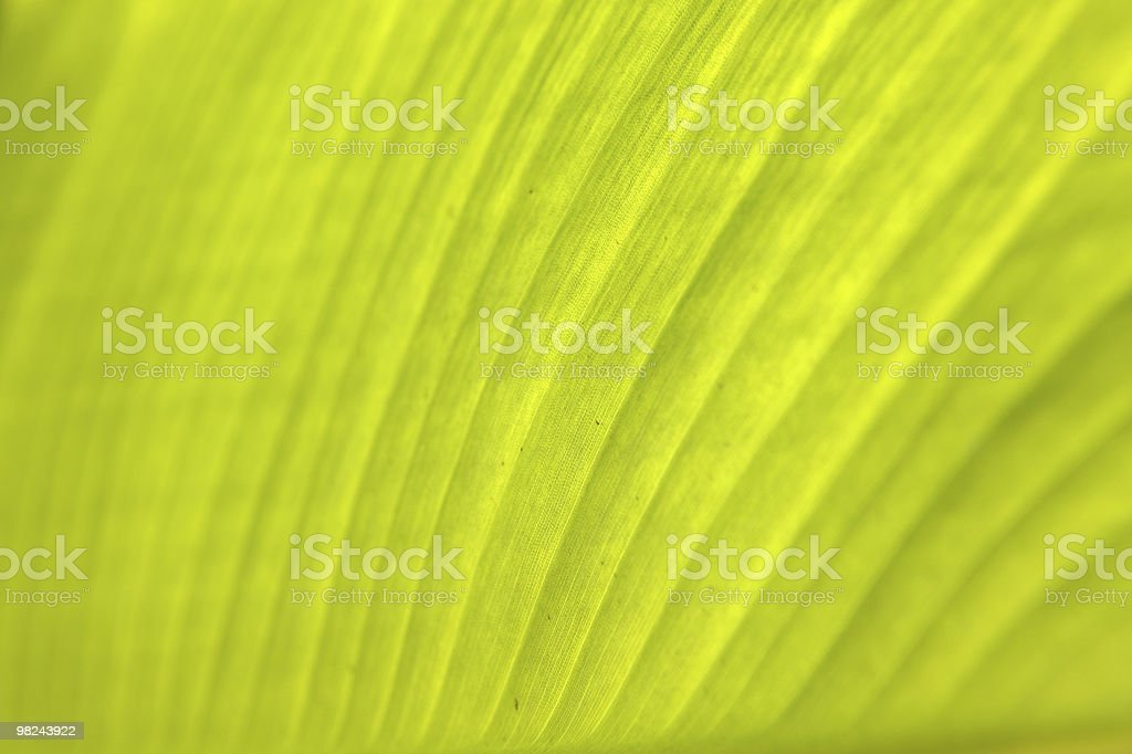 Close-up of a palm tree leaf royalty-free stock photo